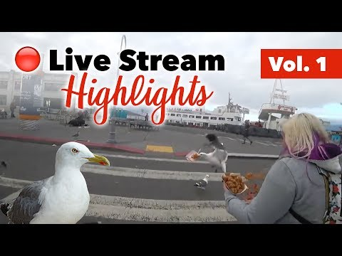 Attack of the seagulls! Carnival games and more - Live stream highlights Vol. 1