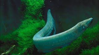 Eel Machhali (Fish) Ka Kissa - By Maulana Tariq Jameel Short Bayan Very Amazing