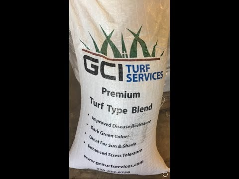 Turf Type Tall Fescue Grass Seed Weed Free