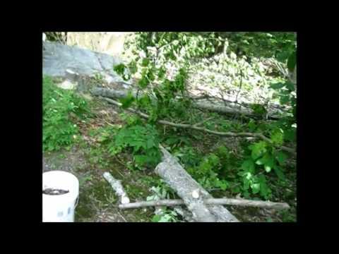 Making My Own Mulch And Organic Gardening