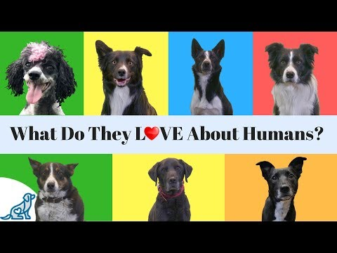 What Do Dogs Love The Most- About Their