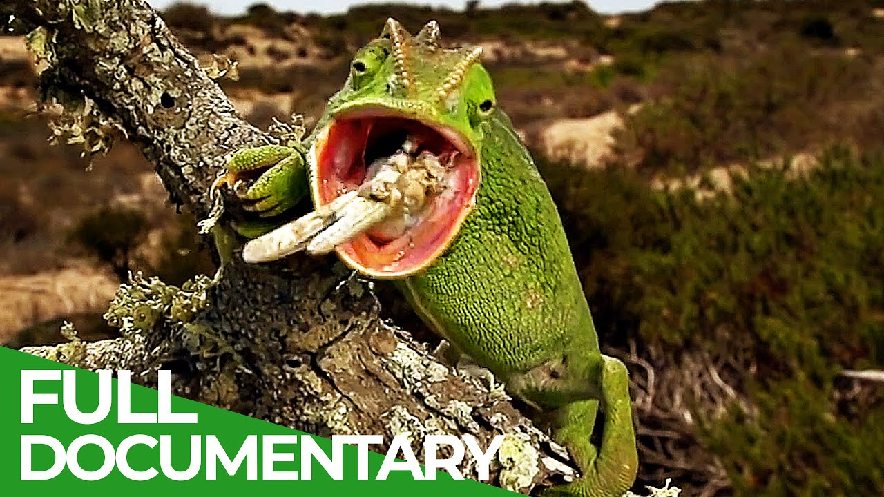 The Gorgeous Wildlife of the Mediterranean | Free Documentary Nature