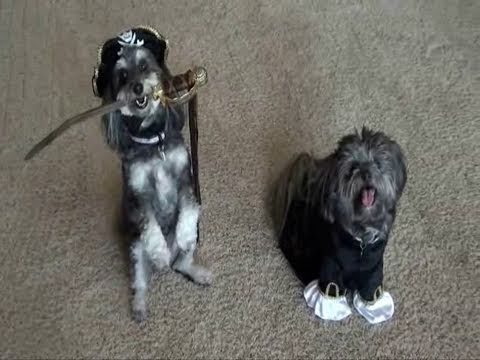 Dog Pirate Adventure!  (The Search for Hidden Treasure)
