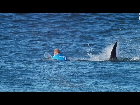 Pro Surfer Fights Off Shark On Live TV