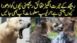 Hidden Facts About Bears in Urdu/Hindi || Amazing Facts About Bear || Urdu Information Lab
