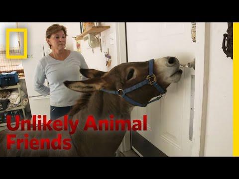 Xxx Mp4 Just A Bit Of Donkey Love Unlikely Animal Friends 3gp Sex