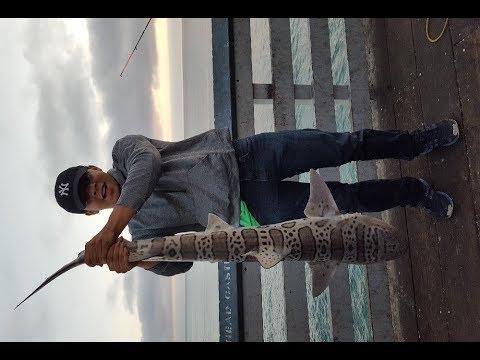 First true Shark I caught a giant leopard shark