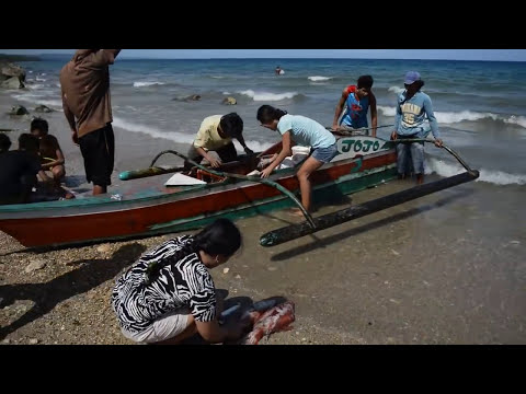 Giant Squid ( dalupapa ) in cebu philippines