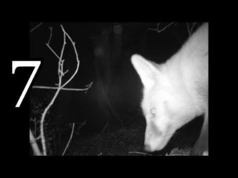 Pondguru vs Nature #7 - (Awesome Trail Camera / Gamecam footage)