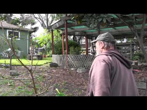 Winter Dormant Spray on Fruit Trees