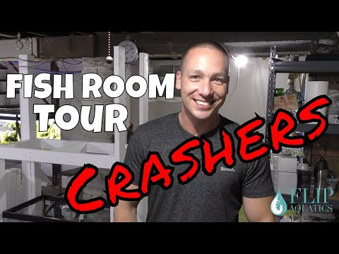 The King of DIY with a Planted Aquarium Tour - Fish Room