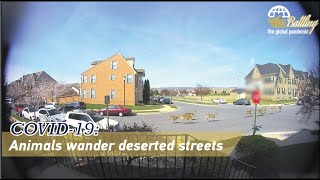 COVID-19: Animals wander deserted streets