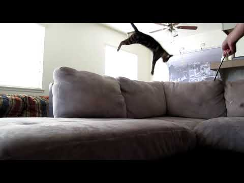 Cat Backflip Onto Couch