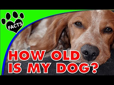 Dog Years: How can you tell how old a dog is?- Animal Facts