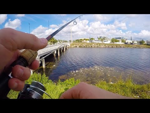 Bass Fishing a Florida Canal and T.Y. Park