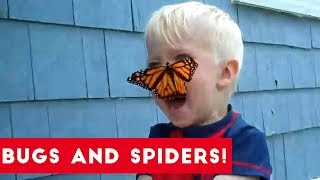 Funniest Insects and Spiders of 2017   Funny Pet Videos