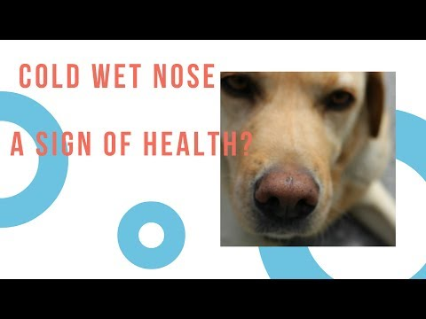Your Dog Has A Cold Nose - Sign of Health?