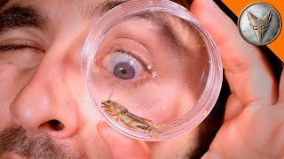 Mole Cricket Experiment!