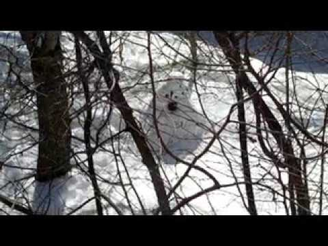 Death of a Snowman Long Version