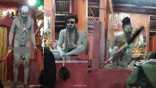 নাগা সাধুদের তান্ডব দেখুন গঙ্গাসাগর মেলাতে | Nanga Sadhu At Ganga Sagar another form of god..