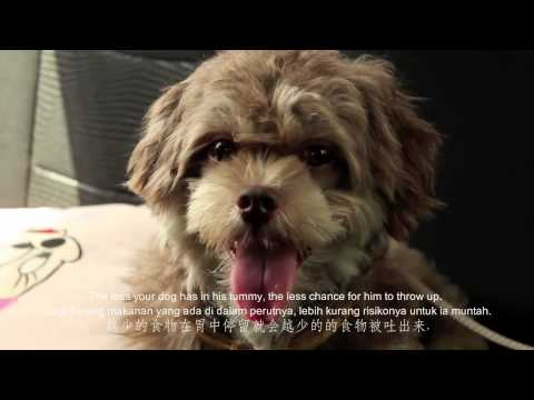 Dog 101 Management Tips Topic 12 - Reduce Or Eliminate Car Sickness In Dogs