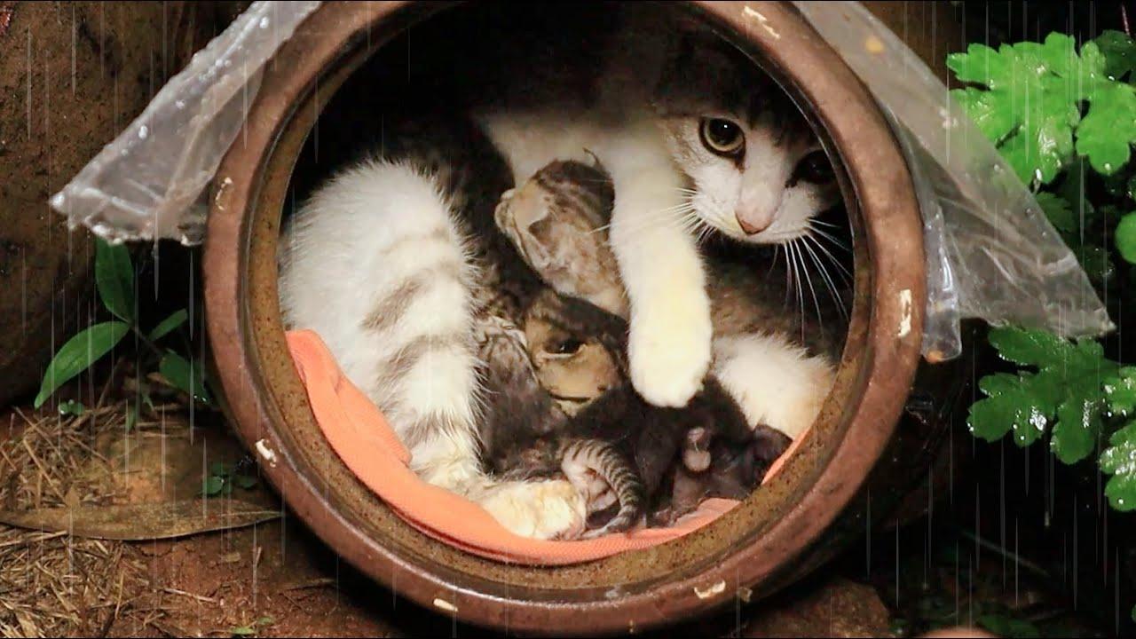 비 맞는 새끼 고양이를 창고로 옮겼더니 따라오는 어미 고양이