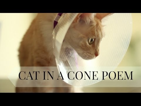 POEM FOR ALL SAD CATS (Cat in a Cone) | Taryn Southern