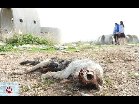 Wasteland - dog rescue in the outskirts of Athens