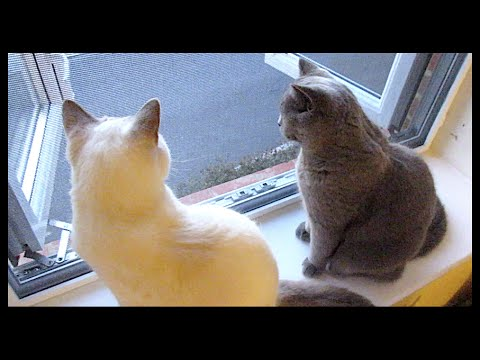 WINDOW PROTECTION FOR INDOOR CATS! | CHRIS & EVE