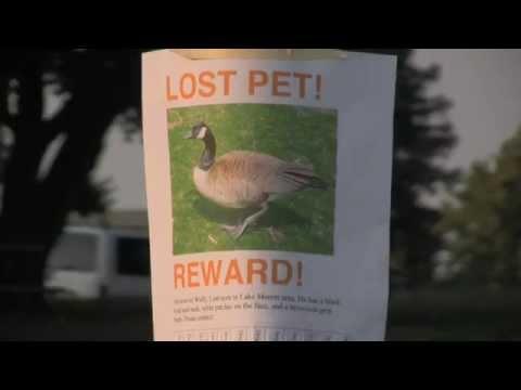 LOST PET!