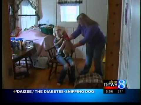 Dog senses potential diabetes concerns
