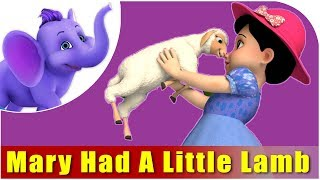 Kids Nursery Rhymes | Mary Had A Little Lamb