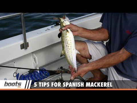 How to Fish: 5 Tips for Spanish Mackerel