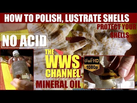 Sea shell Collection : How to make shine and polish your seashells : Mineral Oil !