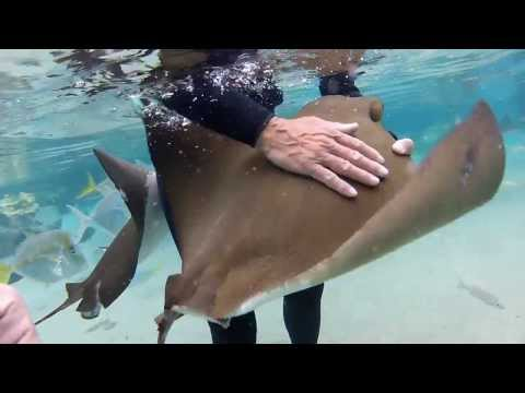 Sting Rays Ate My Camera At Discovery Cove Orlando!!!