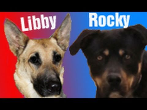 Dog rescue: Rocky & Libby - Please share and help find them a home.
