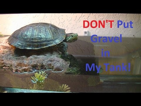 Don't Use Gravel For You Turtle Tank.  Gravel can kill your turtle.