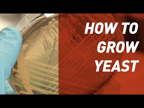 How to grow Yeast - Singer Instruments