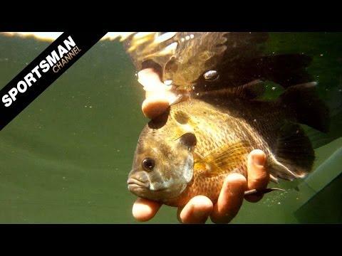 Texas Fly Fishing: Bluegills