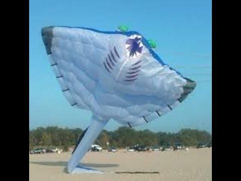 Sting ray kite - Hyderabad kite festival 2018