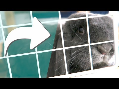 Only Rabbit Owners Will Understand...