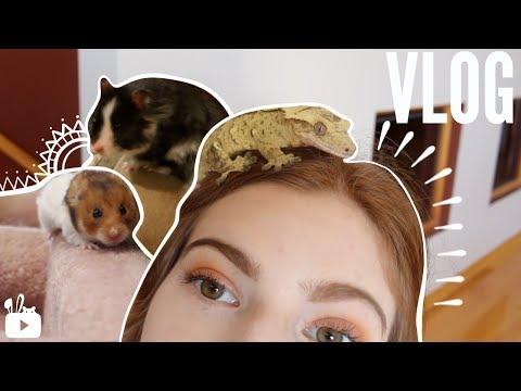 Hamster parkour, bunnies & geckos | VLOG