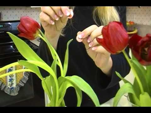 How to Make Tulips stand straight - Joni Hilton