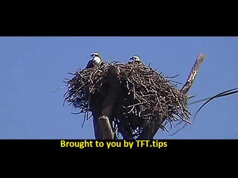 Honeymoon Island & Osprey -  Dunedin, Florida