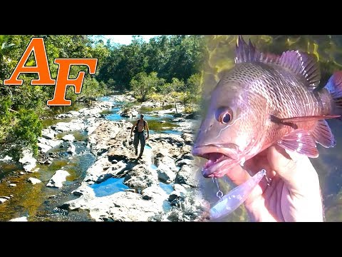 Adventure Jungle Fishing w Mangrove Jack an amazing Explore EP.409
