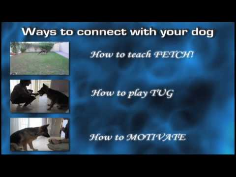 Dog training tip: connecting with your dog.