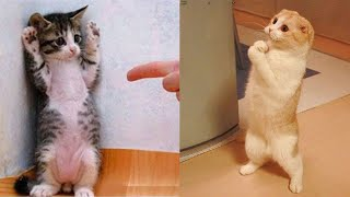 Funniest Animals - Best Of The 2021 Funny Animal Videos #11