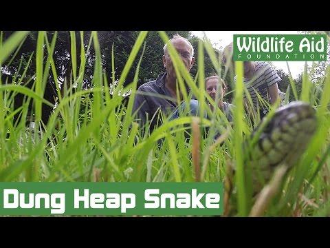 A very smelly snake rescue!