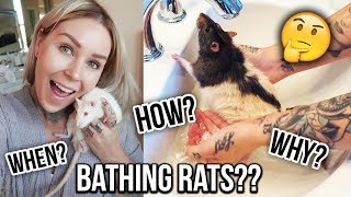 BATHING RATS & TRIMMING NAILS?! 🐭🛁 | KristenLeannimal