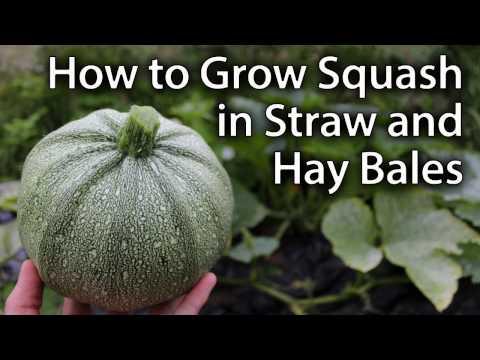 Growing Squash in Straw/Hay Bales - Sustainable Vegetable Gardening